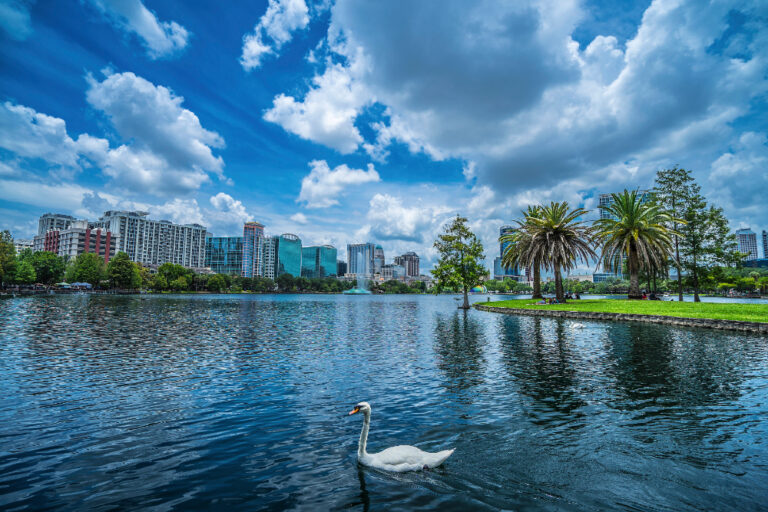Lake Eola Park with condos in the background and a swan swimming in the foreground
